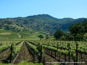 Napa Valley vineyard-Vaca Mtns
