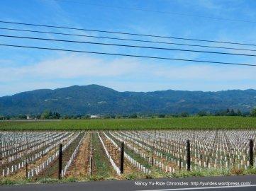 Napa Valley-Mayacamas Mtns
