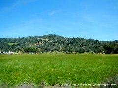 green meadows-Vaca Mtns