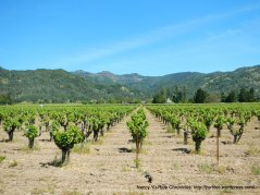 Napa Valley vineyards