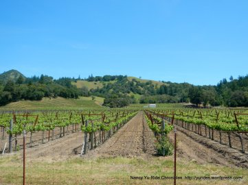 Knights Valley vineyards