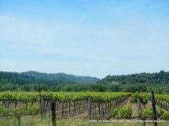 Knights Valley vineyards