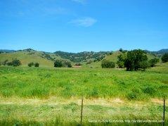 green meadows