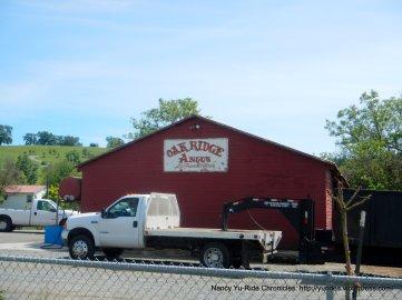 Angus ranch
