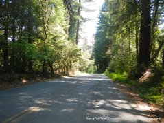 Coleman Valley Rd