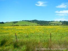fileld of wildflowers