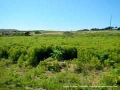 bay meadows