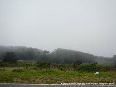 Bodega Bay coastal landscape