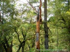 thick tree bark