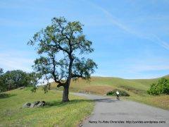 Kings Ridge-gentle rollers