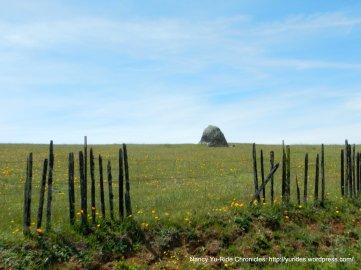 greeb meadows
