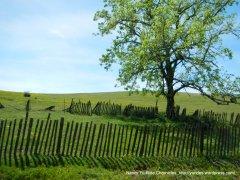 wooden fenceline