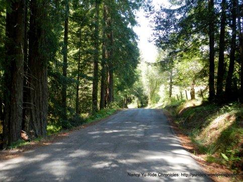 Kings Ridge-through the woods