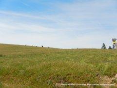 vast meadows
