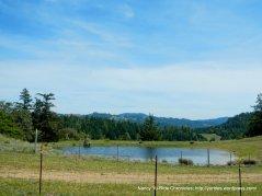 stock pond
