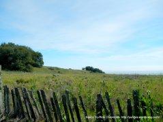 ridge top meadows