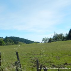 hill top meadows