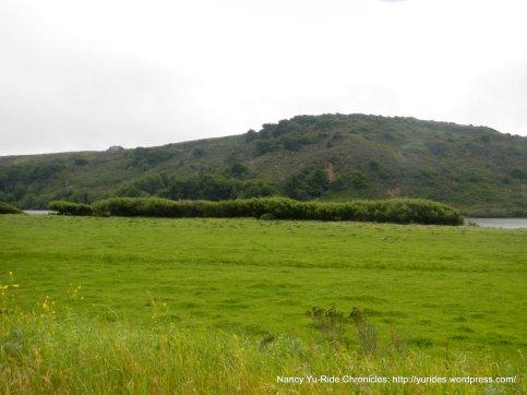green meadows along the river