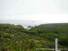 coastal shrubs
