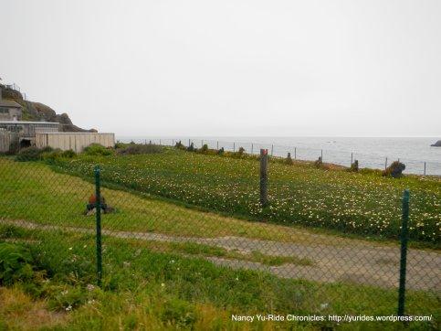 colorful coastal landscape
