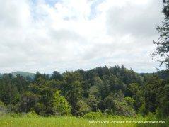 green woodlands