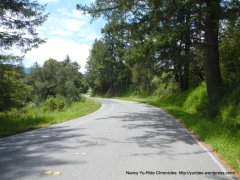 Pescadero Creek Rd summit
