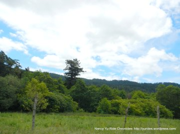 fgreen woodlands
