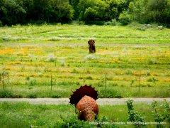 dinosaur challenge amongst the poppies