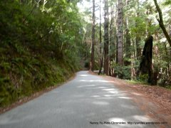 gorgeous redwood forest