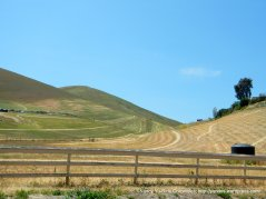 fresh cut hills