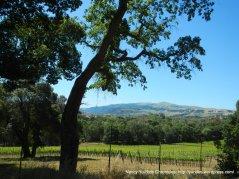 Sunol vineyards