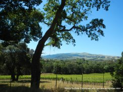 Sunol vineyards