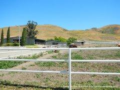 horse ranch-Evans Rd