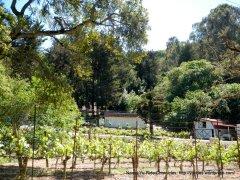 Westover Winery Vineyards