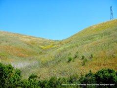 soft hills