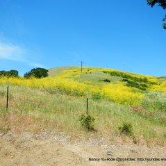 Bush Hill