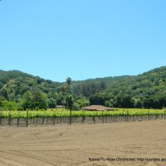canyon vineyards