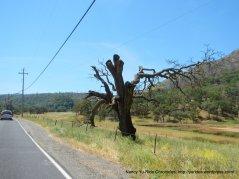 grand tree trunk