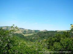 Black Hills landscape