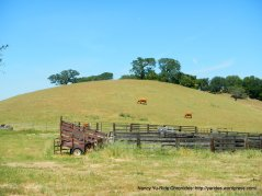 cattle pen & grazing hills