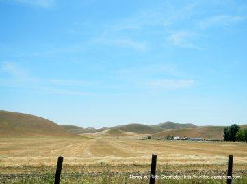 hay fields