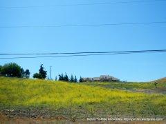 hillside wildflowers