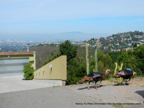 great views-turkeys too!