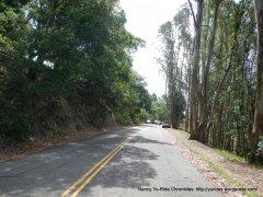 eucalyptus lined raod