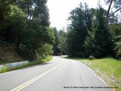 Skyline Blvd to Roberts Park