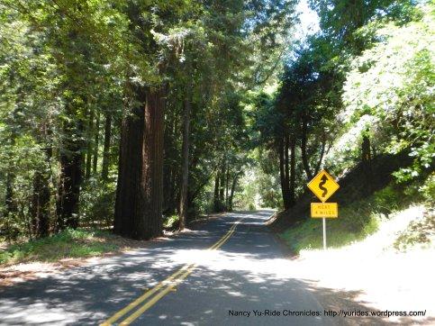 Pinehurst Rd thru the redwoods