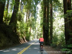 Pinehurst Rd thru the redwoods