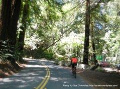 Pinehurst Rd thru the redwoods to Canyon