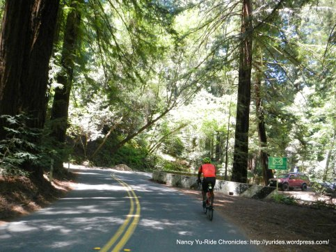 Pinehurst Rd thru the redwoods to Canyon