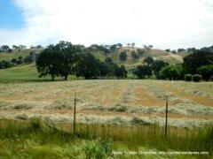 fresh cut fields